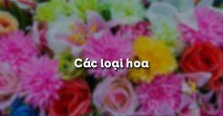 Bài 29: Các loại hoa