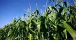 Bài 39: Thực hành Tìm hiểu thành tựu chọn giống vật nuôi và cây trồng