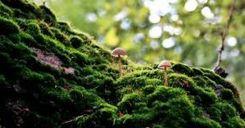 Bài 27: Lớp vỏ sinh vật. Các nhân tố ảnh hưởng đến sự phân bố thực, đông vật trên trái đất