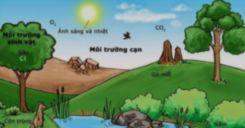Bài 45-46: Thực hành Tìm hiểu môi trường và ảnh hưởng của một số nhân tố sinh thái lên đời sống sinh vật