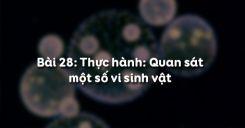 Bài 28: Thực hành Quan sát một số vi sinh vật