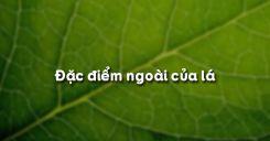 Bài 19: Đặc điểm bên ngoài của lá