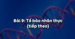 Bài 9: Tế bào nhân thực tiết 2