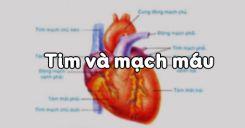 Bài 17: Tim và mạch máu
