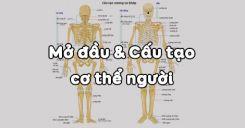 Bài 2: Cấu tạo cơ thể người