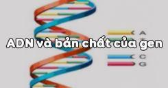 Bài 16: ADN và bản chất của gen