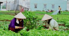 Bài 23: Thực hành - Phân tích sự chuyển dịch cơ cấu ngành trồng trọt