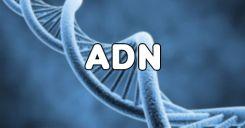 Bài 15: ADN