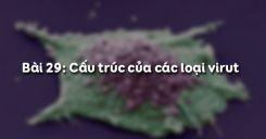 Bài 29: Cấu trúc của các loại virut