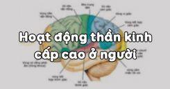 Bài 53: Hoạt động thần kinh cấp cao ở người