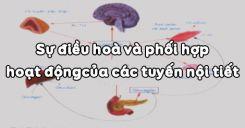 Bài 59: Sự điều hoà và phối hợp hoạt động của các tuyến nội tiết