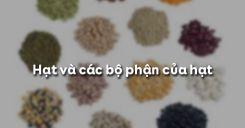 Bài 33: Hạt và các bộ phận của hạt