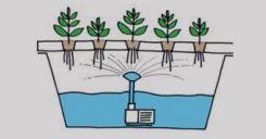 Bài 7: Thực hành Thí nghiệm thoát hơi nước và thí nghiệm về vai trò của phân bón