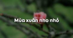 Soạn bài Mùa xuân nho nhỏ của Thanh Hải - Ngữ văn 9