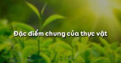 Bài 3: Đặc điểm chung của thực vật