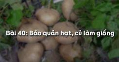 Bài 41: Bảo quản hạt, củ làm giống