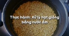Bài 17: Thực hành: Xử lý hạt giống bằng nước ấm