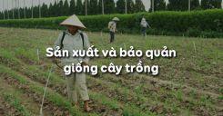 Bài 11: Sản xuất và bảo quản giống cây trồng