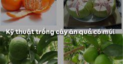 Bài 7: Kỹ thuật trồng cây ăn quả có múi