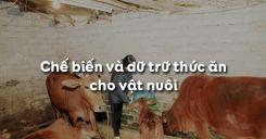 Bài 39: Chế biến và dữ trữ thức ăn cho vật nuôi