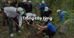 Bài 26: Trồng cây rừng