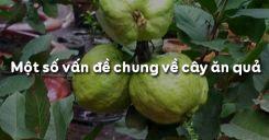 Bài 2: Một số vấn đề chung về cây ăn quả