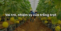 Bài 1: Vai trò, nhiệm vụ của trồng trọt