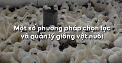 Bài 33: Một số phương pháp chọn lọc và quản lý giống vật nuôi