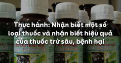 Bài 14: Thực hành: Nhận biết một số loại thuốc và nhận biết hiệu quả của thuốc trừ sâu, bệnh hại
