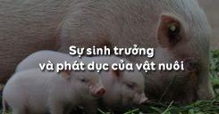 Bài 32: Sự sinh trưởng và phát dục của vật nuôi