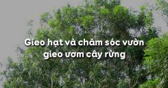 Bài 24: Gieo hạt và chăm sóc vườn gieo ươm cây rừng