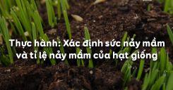 Bài 18: Thực hành: Xác định sức nảy mầm và tỉ lệ nảy mầm của hạt giống