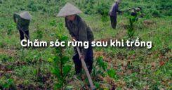 Bài 27: Chăm sóc rừng sau khi trồng