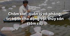 Bài 54: Chăm sóc, quản lý và phòng, trị bệnh cho động vật thủy sản (tôm cá)