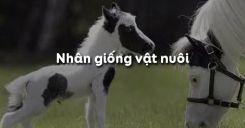 Bài 34: Nhân giống vật nuôi
