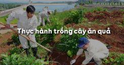 Bài 13: Thực hành trồng cây ăn quả