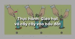 Bài 25: Thực hành: Gieo hạt và cấy cây vào bầu đất