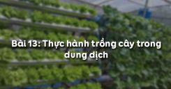 Bài 14: Thực hành trồng cây trong dung dịch