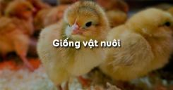 Bài 31: Giống vật nuôi