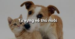 Từ vựng về thú nuôi trong tiếng Anh