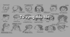 Từ vựng đầu tóc trong tiếng Anh