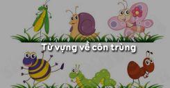 Từ vựng về côn trùng trong tiếng Anh