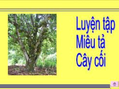 Tập làm văn: Ôn tập về tả cây cối