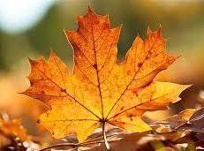 Soạn văn 12 Mùa lá rụng trong vườn tóm tắt