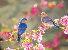 Soạn văn 9 Mùa xuân nho nhỏ tóm tắt