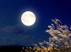 Soạn văn 8 Ngắm trăng tóm tắt