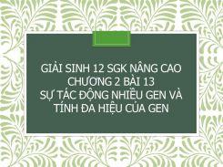 Giải Sinh 12 SGK nâng cao Chương 2 Bài 13 Sự tác động nhiều gen và tính đa hiệu của gen