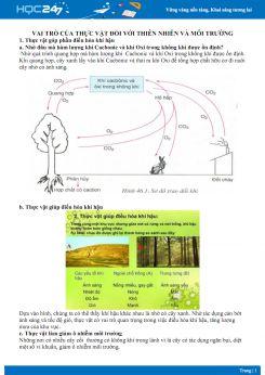 Vai trò của thực vật đối với thiên nhiên - Sinh học 6