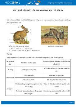 Bài tập về Động vật lớp thú môn Sinh học 7 có đáp án